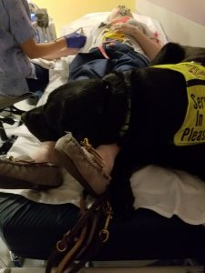 psychiatric service dog helps a patient through a medical procedure with deep pressure therapy