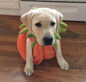 puppy raise puppy in halloween costume