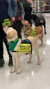 about us 3 service dogs in training