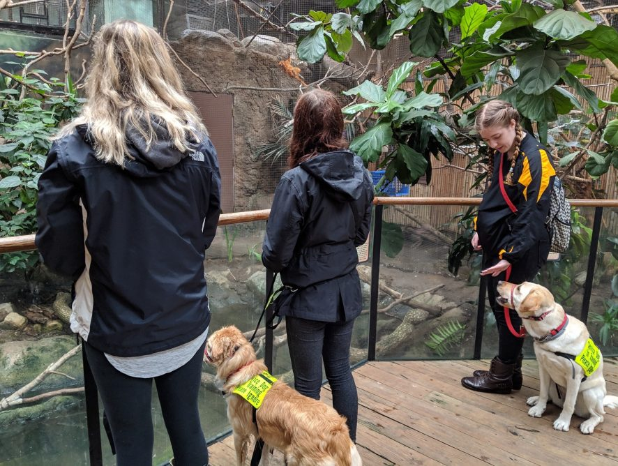 community service dogs at the zoo