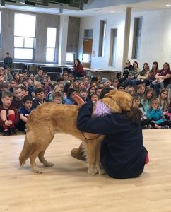 community - service dog assembly