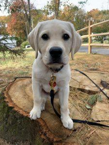 help puppy