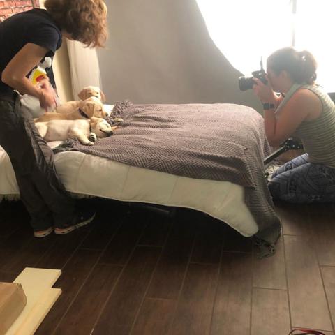 volunteer puppies in photo shoot