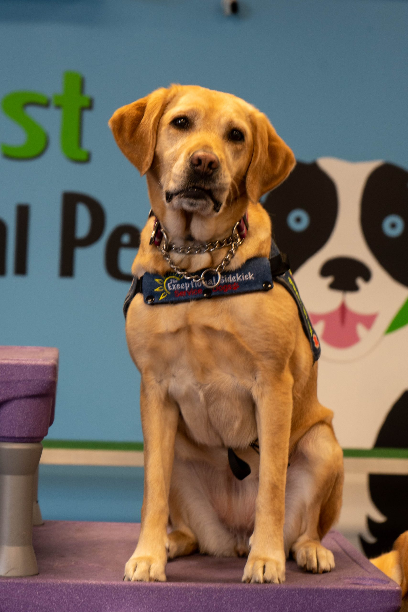 News and Events picture of Service dog in vest