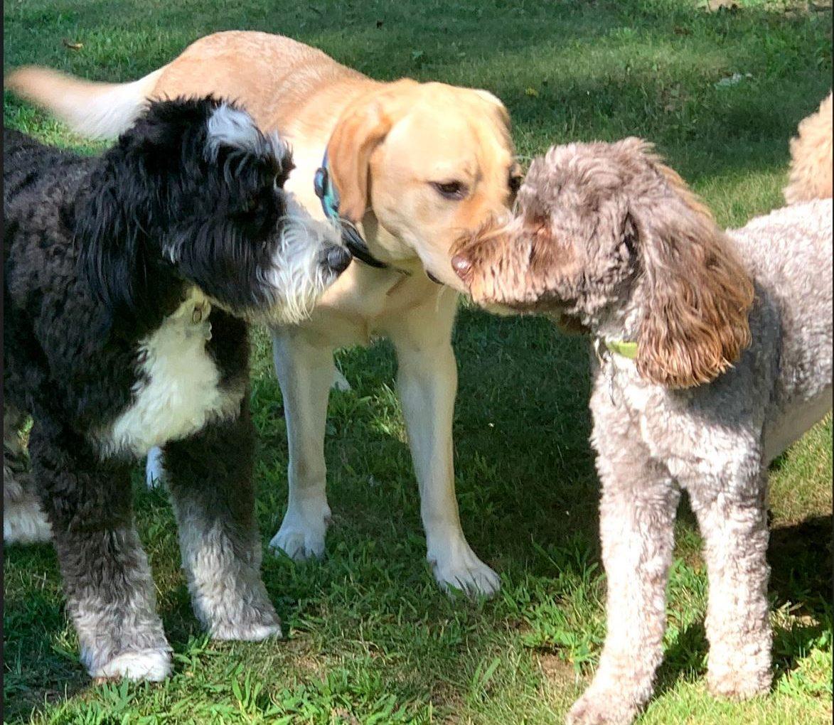 Part-Time Puppy Raiser Day 3