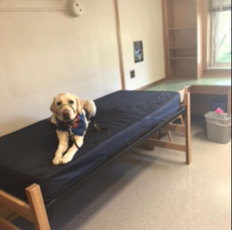 College with a Service Dog